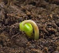Seedling 200