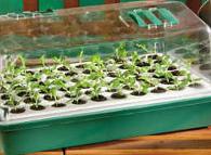 Park Seed's no frills Bio Dome