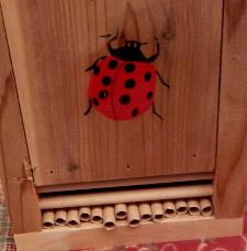 Wasp Ladybug house DSCN2033 225