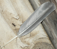 Ant Feather