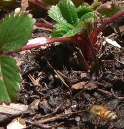 Bee landing frame16