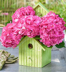 Bird House of Blooms