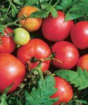 calcium_tomatoes175