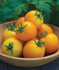 solar-tomato-200