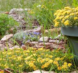 raised bed blue flowers 250 DSCN1167