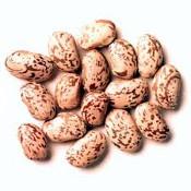 Protein_Pinto_Bean175